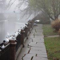Туман :: Яна