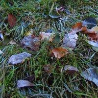 Солнечный день в ноябре. Уже с морозцем :: Андрей Лукьянов