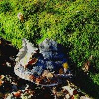Древесный гриб на павшем дереве :: Милешкин Владимир Алексеевич