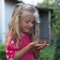 Чудесная жабочка :: Светлана