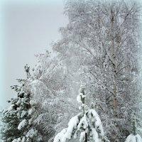 Зимний подарок. :: Николай Масляев