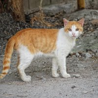 Кошки на улицах Феодосии :: Ксения Старикова