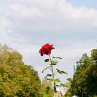 Набережная Самары :: Екатерина Чурина