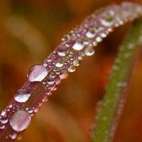Осенние капли дождя :: Александр Велигура