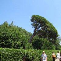 Дерево в поклоне :: Вера Щукина