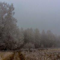 Ноябрьский туман :: Виктор