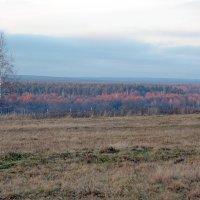 Поздняя осень. :: Николай Масляев