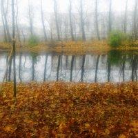 Река Таракановка в тумане :: Юрий Тихонов