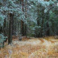 Леса готовятся к зиме... :: Лесо-Вед (Баранов)