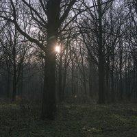 Лучи осеннего заката :: Яков Реймер