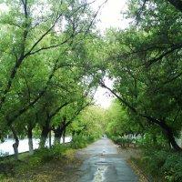 9. После дождя. :: Александр
