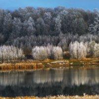 Засеребрились деревья с тихим морозным рассветом... :: Galina Leskova