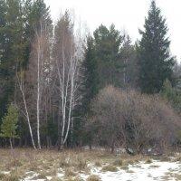 В лесу в ноябре :: Галина