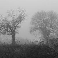 Деревья в тумане :: Сергей Корнев