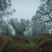 Ноябрьский туман :: Алексей Кошелев
