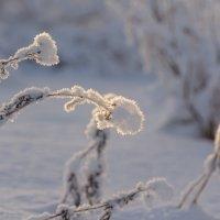 Снежная одежда :: Олег Кулябин