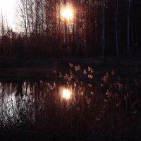 Свет ноября :: Татьяна Ломтева