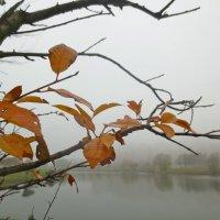 последние листья :: Елена