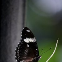 бабочка 1 :: Александр Иванов