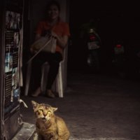 Thai cat.In the alleys of Pattaya. :: Илья В.
