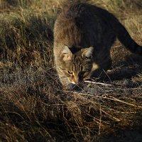 Выход на охоту :: Виктор Коршунов