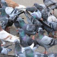 птичий базар :: Alima Назарова