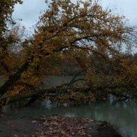 Утонуть в осени :: Александр Плеханов