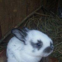 Милый кролик :) :: Anny *