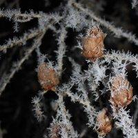 Зимняя лиственница :: Андрей Скорняков