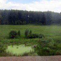 Цаплино озерцо . :: Мила Бовкун