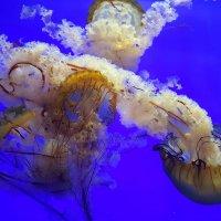 В шанхайском океанариуме :: Tatiana Belyatskaya