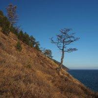 Синее небо,Крутые горы,Чистая вода --Всё это на Байкале, господа... :: Александр Попов