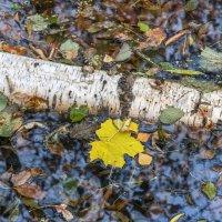 Осенняя зарисовка. Фото 17. :: Вячеслав Касаткин