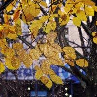 Тёплый ноябрь :: Ирина Румянцева