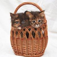две сестрички :: Седа Ковтун