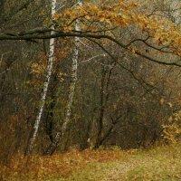 Тропинка в осень ... :: Игорь Малахов