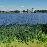 Калининград  Верхнее озеро. :: Murat Bukaev