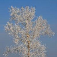 Вот и зима :: Savayr