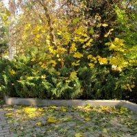 Золотая осень... :: Нина Бутко