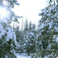Зима :: Lea Lea