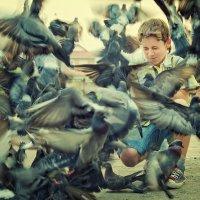 Голуби :: Ксения Старикова