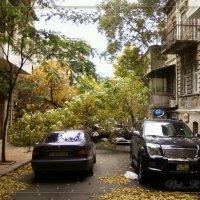 упало дерево... :: maxim