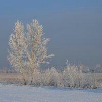Зимний Омск :: Savayr