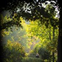 Прозрачный свет осени :: Игорь Герман