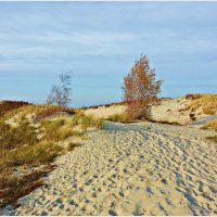 Осень, залив. :: Валерия Комова