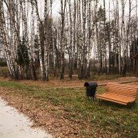 Просто осень :: Виктор Филиппов
