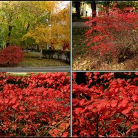 Осень :: Нина Бутко