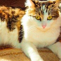 Котята должны считаться единицами измерения уюта и счастья и считаться как 1 кт. :: Наталья Александрова