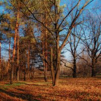 Осень, ночбрь :: Наталья Лакомова