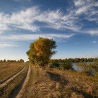 Дорога у реки. :: Виктор Гришенков